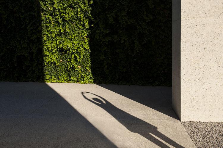 Shadow of tree on street