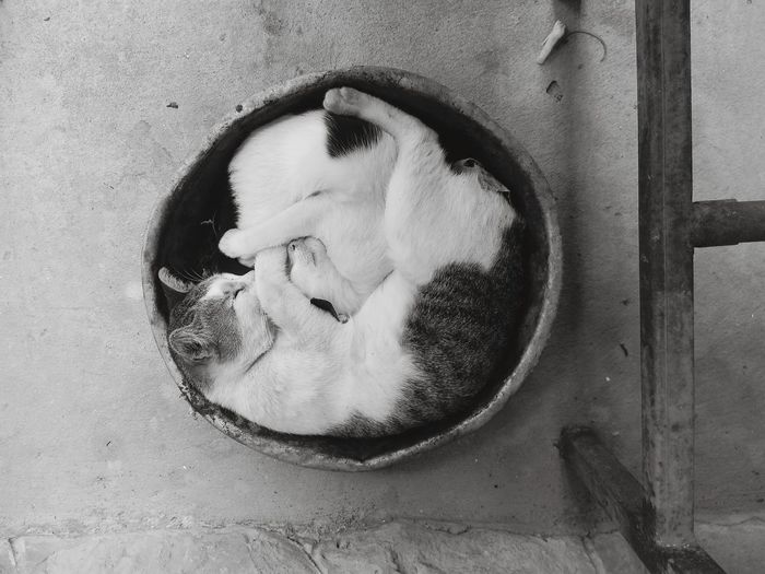 Close-Up Of Two Cats Sleeping