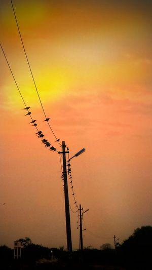 Sunset Nature Birds🐦⛅ Indian Road Evening