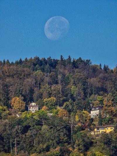 Tree Moon Sky
