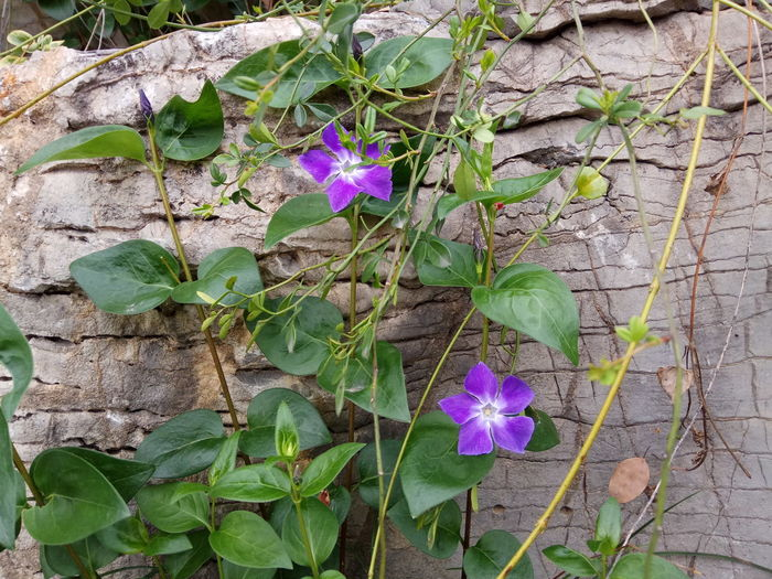 Flower Nature Freshness Fragility Purple Beauty In Nature Plant Growth High Angle View Leaf Petal Flower Head Outdoors No People Day Blooming Close-up