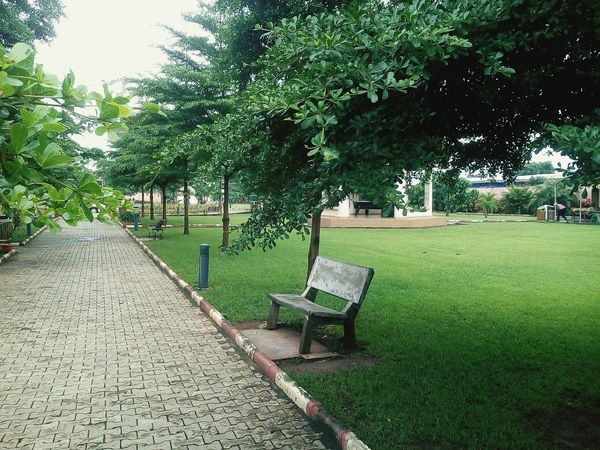 Photography is expressing it self through me Bench Park Relaxing Tree Grass Day Green Color Growth No People Outdoors Nature Park - Man Made Space Sky Beauty In Nature Tranquility