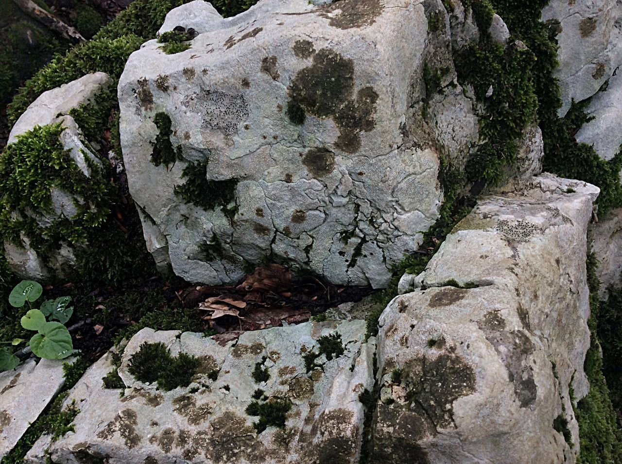 rock - object, rock formation, nature, outdoor pursuit, hiking, landscape, beauty in nature, tranquility, cave, no people, travel destinations, outdoors, day, adventure, forest, tree trunk, mountain, nature reserve, clear sky, tree, extreme sports, close-up