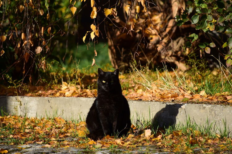 Jacky Cats Of EyeEm EyeEm Nature Lover EyeEm Masterclass Autumn Autumn🍁🍁🍁 Fall Cat Black Cat CDRE Cats Pets Sitting Domestic Cat Feline