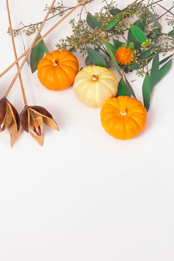 High angle view of orange leaves against white background