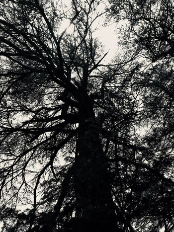 Tree 🌳 Natural Net Pattern Black And White Black And White Photography Tree Plant Low Angle View Silhouette Branch No People Sky Full Frame Tree Canopy  Scenics - Nature Day Beauty In Nature Growth Sunlight Tree Trunk Backgrounds Trunk Nature Tranquility Outdoors