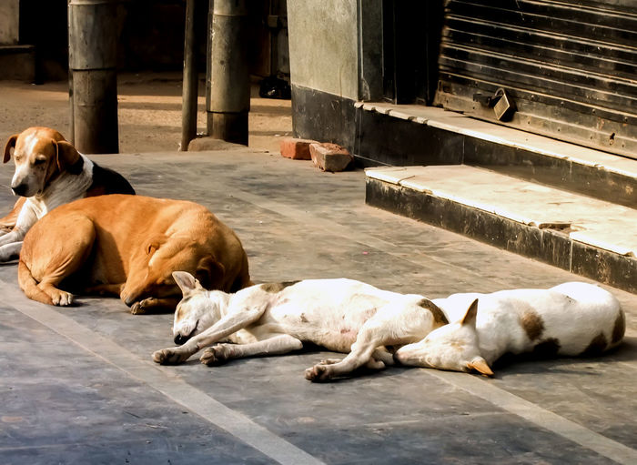 Dogs sleeping on floor
