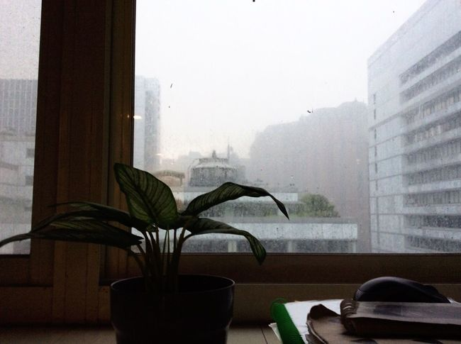 Window Indoors  Vase Table Window Sill No People Home Interior Curtain Day Built Structure Architecture Close-up Rain From Above I Hate Raining Days Lonelyplanet Lone Cityscape City Flower Looking Through Window Watch The Rain Watching Rain Drops