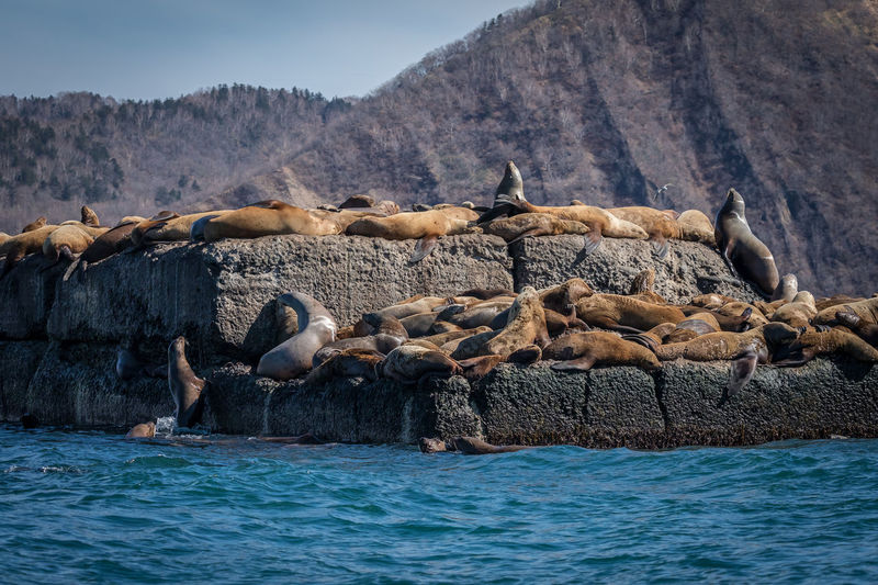 Animal Wildlife Animals In The Wild Animal Themes Animal Group Of Animals Water Large Group Of Animals Mammal Sea Mountain Nature Vertebrate Day No People Underwater Rock Beauty In Nature Aquatic Mammal Sea Lion Marine Seal - Animal