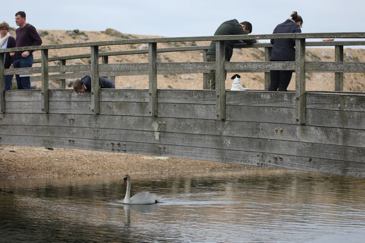 Animal Wildlife Animals In The Wild Architecture Bird Bridge Over River Day Dog Hurst  Looking Over Bridge Mammal Nature One Animal Outdoors People People Watching Perching Real People River Sky Swan Swimming Water Water Bird Waterfront Wildlife