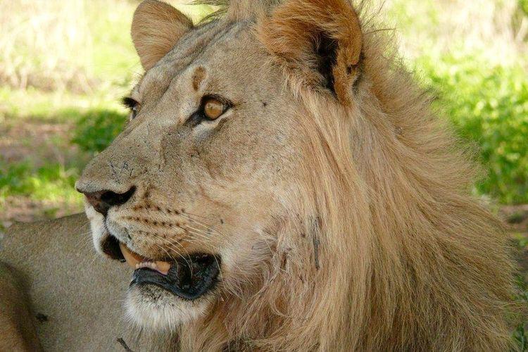 Kenya safari -