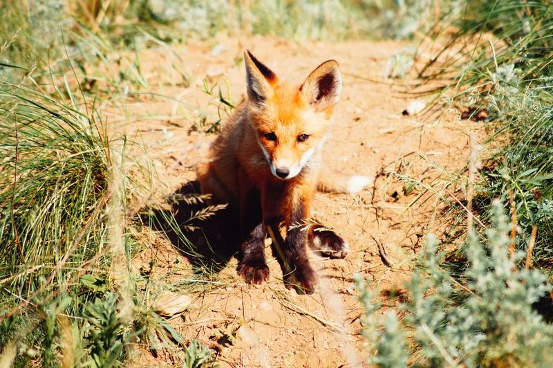 High angle view of fox on land