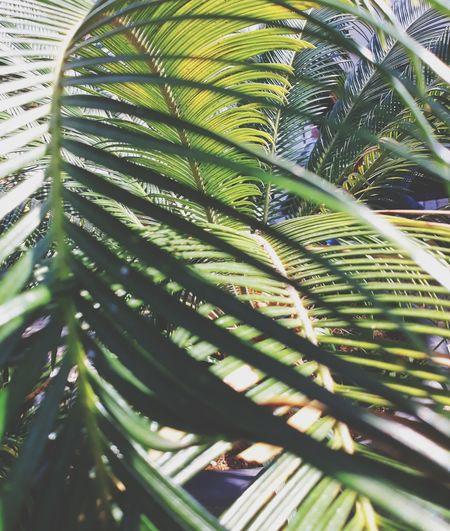 Leaf Frond Tree