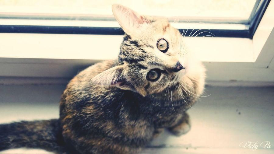 Shootanimals Cats 🐱 Cat Lovers Cat♡ Cats Of EyeEm Rip Missyou Foreverinmyheart