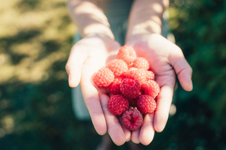 Raspberries in hands of girl while picking Blonde Dress Freshness Hands Presenting Raspberries Activity Berry Fruit Close-up Countryside Focus On Foreground Food Food And Drink Freshness Girl Hands Holding Food Healthy Eating Human Hand Idyllic One Person Organ Raspberry Raspberry Picking Raspberry Season Real People