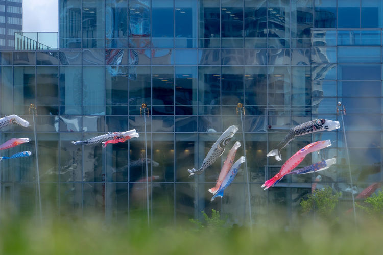 View of fish swimming in glass building