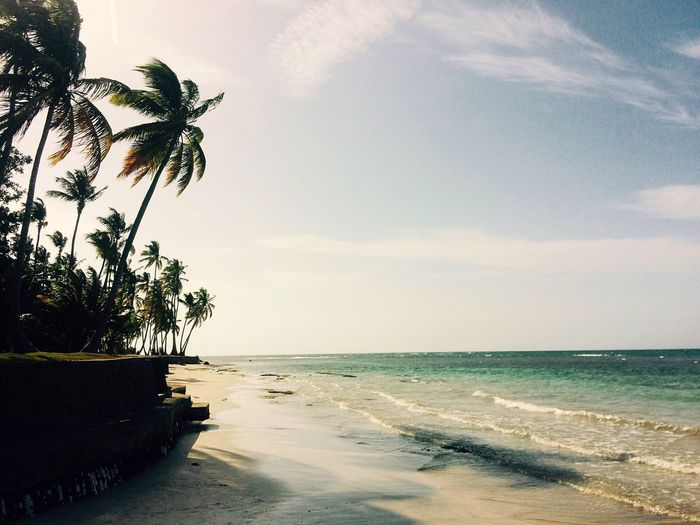 Tropical Paradise Beach Palm Trees Playa Beautiful Warm Sand Sun Sea