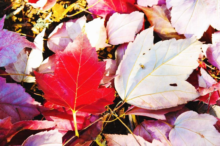 Fall Fall Beauty