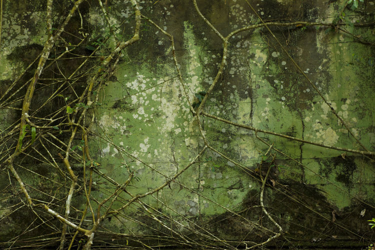 Full frame shot of tree trunks in forest
