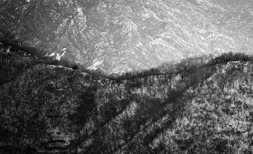 Full frame shot of trees against sky