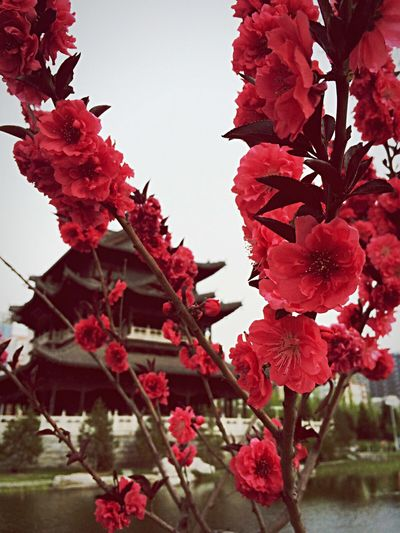 Chinaina c]a c ]Hello World Spring Flowers Spring Tree Flowers