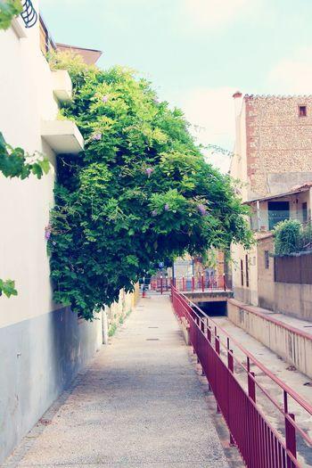 Nature vs Town Green Color Architecture Built Structure Alley Plants 🌱 Naturevscity Naturevsmanmade Flowers,Plants & Garden Fleur
