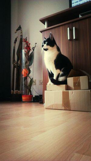 König der Pakete