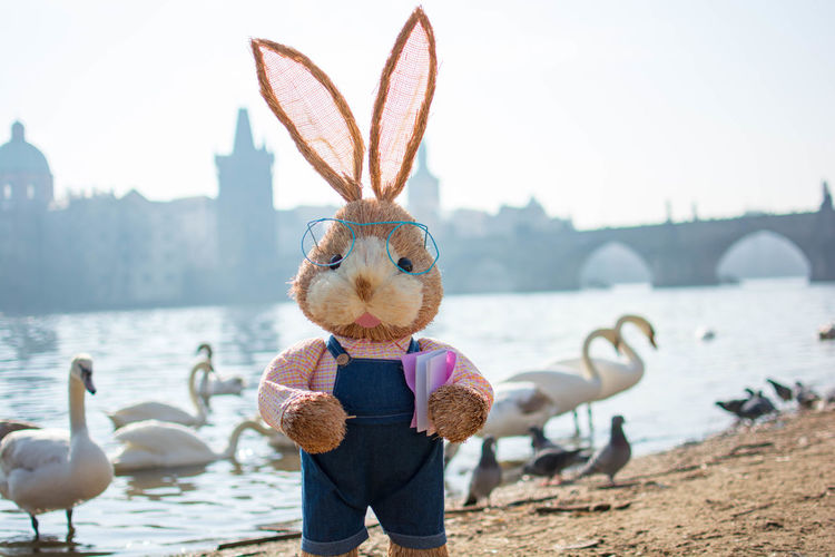 The Easter Bunny is hanging out in Prague. Follow him along as he checks out the city and see who he meets along the way. Animal Themes Animals In The Wild Bird Bunny  Clear Sky Close-up Easter Easter Bunny Easter Ready Easterbunny Eye4photography  EyeEm Best Shots EyeEmBestPics Focus On Foreground Leisure Activity Lifestyles Nature Nikon Nikonphotography Shore Standing Taking Photos Taking Pictures Water Wildlife