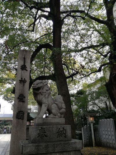 Tree Statue Sculpture Growth No People Outdoors Day Nature Sky Shrine Japan Japan Photography Japanese Temple Komainu