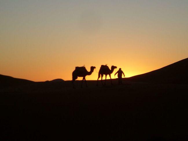 Merzouga Merzougadeserts Merzougadunes Sunset Merzouga Sahara Desert Trippin Morocco Nature