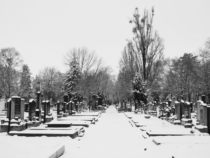 Cemetery Cemetery Photography Blackandwhite Bnw_collection Streetphotography Nature_collection Snowy Trees Vienna Wien vanishing point Snow Tree Winter Cold Temperature Outdoors Day People