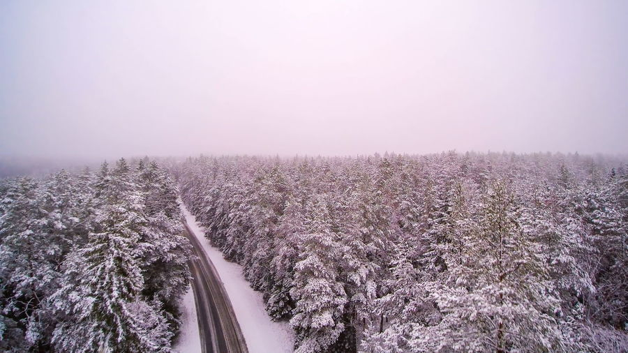 Aerial shot of the forest and the road covered in thick white snow Beauty In Nature Plant Fog Scenics - Nature Land Tree Nature Environment Landscape Tranquility No People Pink Color Tranquil Scene Idyllic Sky Flower Road Growth Freshness Outdoors Springtime Purple Spruce Tree Pine Tree Black And White Viitna Estonia Lahemaa National Park Aerial View Winter Snow Tourism