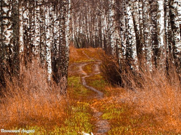 Лес Осень 🍁🍂 Nature Forest язычество желтый оранжевый Tree No People Growth Outdoors Day Landscape Beauty In Nature Scenics Grass Sky