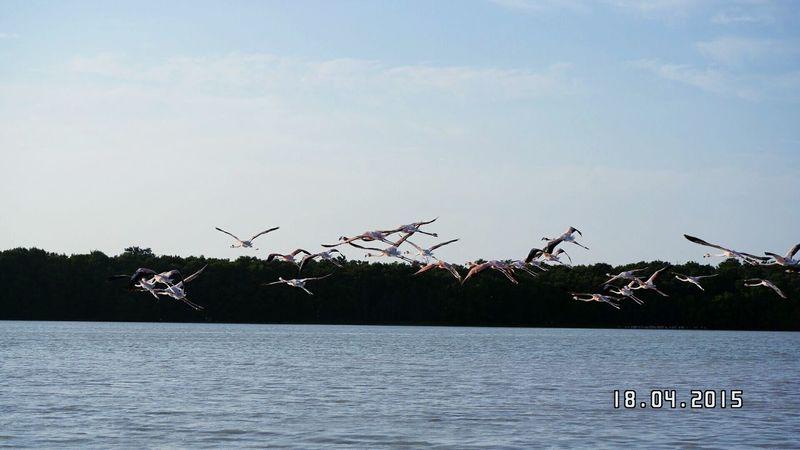 Mexico De Mis Amores Nature_collection Natural Beauty Birds_collection Celestun