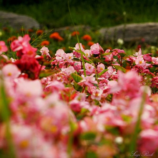 花 ピンクの花 赤い花 Pink Flower Red Flower 公園 Park This Is Natural Beauty