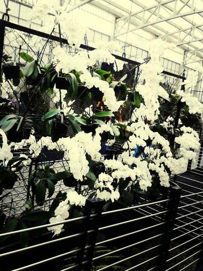 Remember Love Spring Flowers Las mas bellas