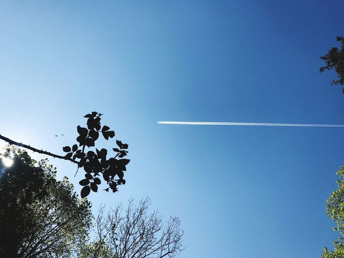 Sky Low Angle View Vapor Trail Tree Cloud - Sky Nature Plant Airplane Copy Space Transportation Day Beauty In Nature No People Outdoors Air Vehicle Directly Below Growth Motion Travel Blue