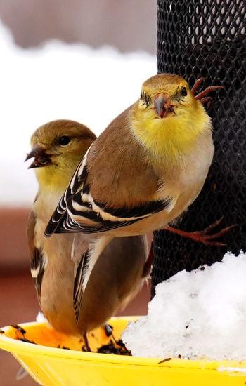 Close-up of birds perching on snow