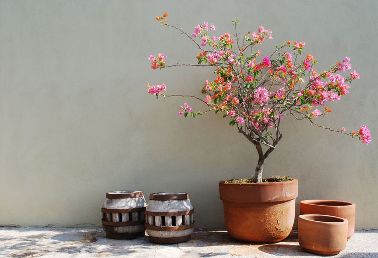 View of potted plant against wall