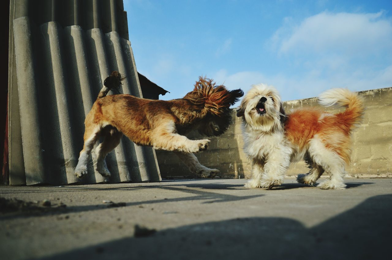 Low Angle View Of Dogs Playing On Floor Against Sky