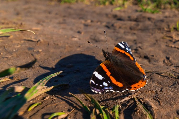 Close-up of butterfly on ground