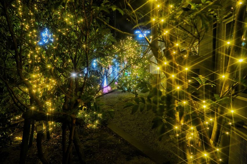 Canon Powershot G7X MarkⅡ クリスマス イルミネーション クリスマスツリー Illuminated Night Celebration Lighting Equipment Glowing Christmas Decoration Christmas Lights Tree Nature Christmas Tree Christmas Lights 木 夜景 Japan Photography Japan EyeEmNewHere EyeEm Selects クロスフィルター Transportation