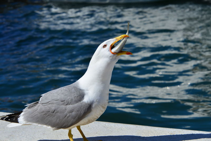 A Table Nature Seagulls Eating Healthy Eye Fish Mother Nature Is Amazing Nature Lover