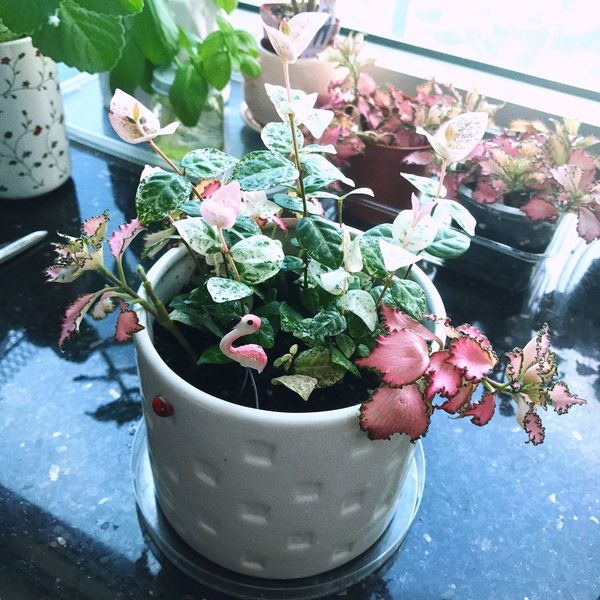 Potted Plant Garden