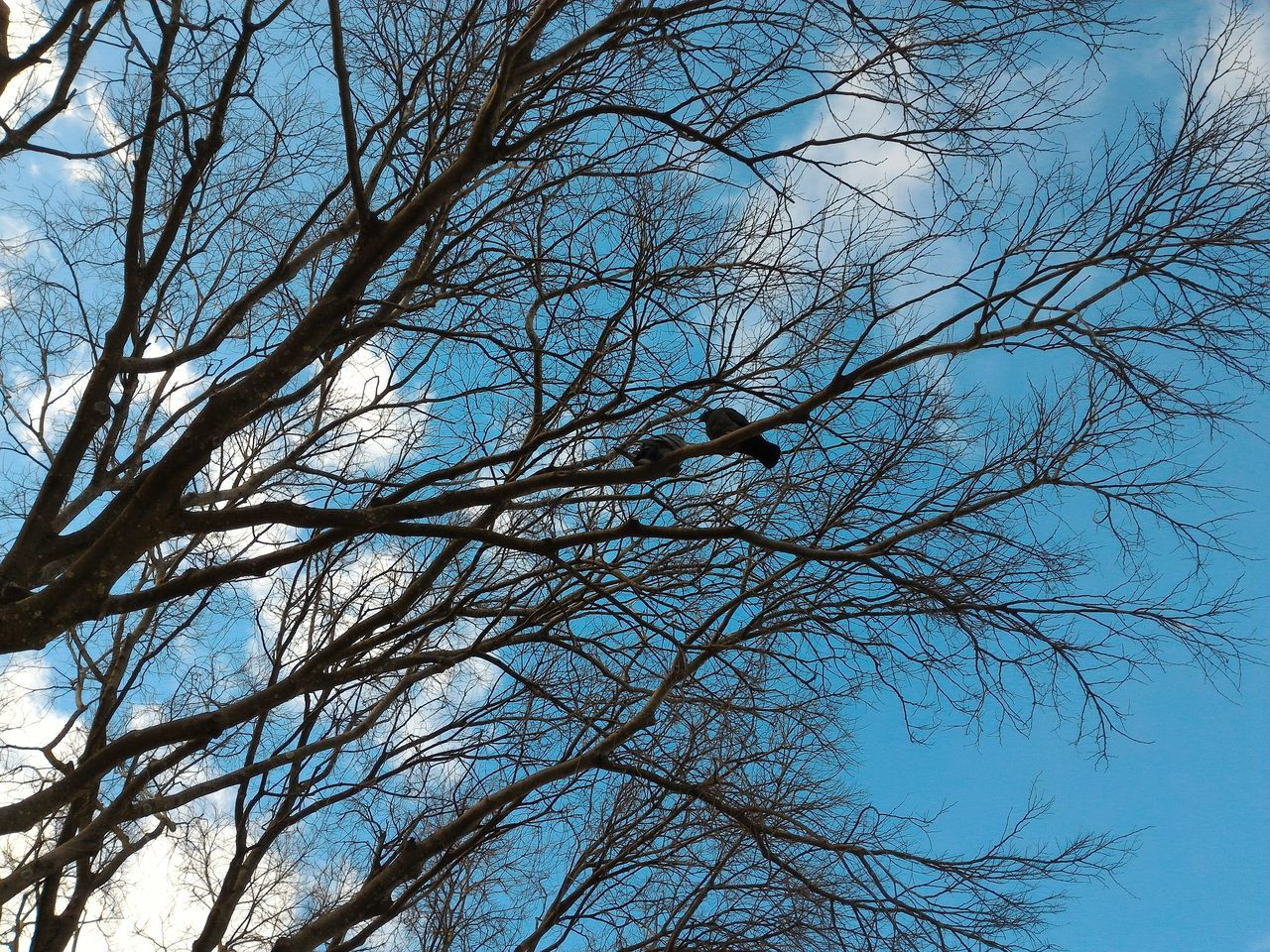 bare tree, tree, animals in the wild, bird, branch, animal themes, animal wildlife, nature, low angle view, no people, one animal, outdoors, sky, day, beauty in nature, clear sky, blue, perching