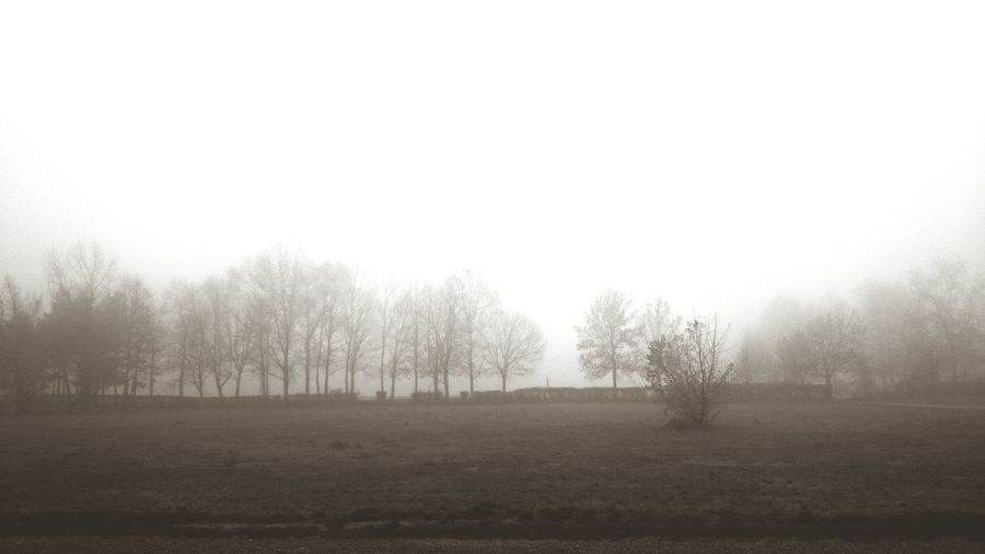 Swimming through the fog... (08th December 2015) My World Little Things Things I'm Thankful For One Photo Every Day Cellphone Photography December 2015 Croatia Morning Trees Autumn Foggy Morning Fog Blackandwhite Photography