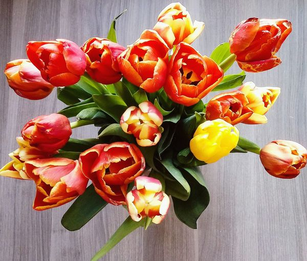 Tulips Tulip Beauty Tulips Flower Beautiful Beauty In Nature Beaitiful Flowers Flower Christmas Decoration Celebration Fruit Leaf Table Close-up Food And Drink Flower Head