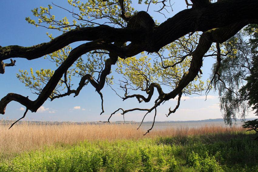Day Landscape Nature Nature No People Oak Outdoors Rügen Silhouette Sky Tree Vilm