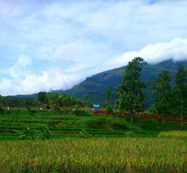 Social Issues Mountain Environmental Conservation Agriculture Nature Plant Field Landscape Cloud - Sky Land Travel Beauty Rice Paddy Growth Outdoors Rice - Cereal Plant Tea Crop Tree Sky Terraced Field