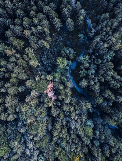 Drone  Munich Animal Themes Backgrounds Beauty In Nature Close-up Day Forest Full Frame Growth Moss Nature No People Outdoors Sea Life Textured  Tranquility Tree UnderSea Underwater